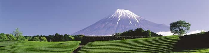【静岡県】の県民性を四字熟語3つで表してみた!